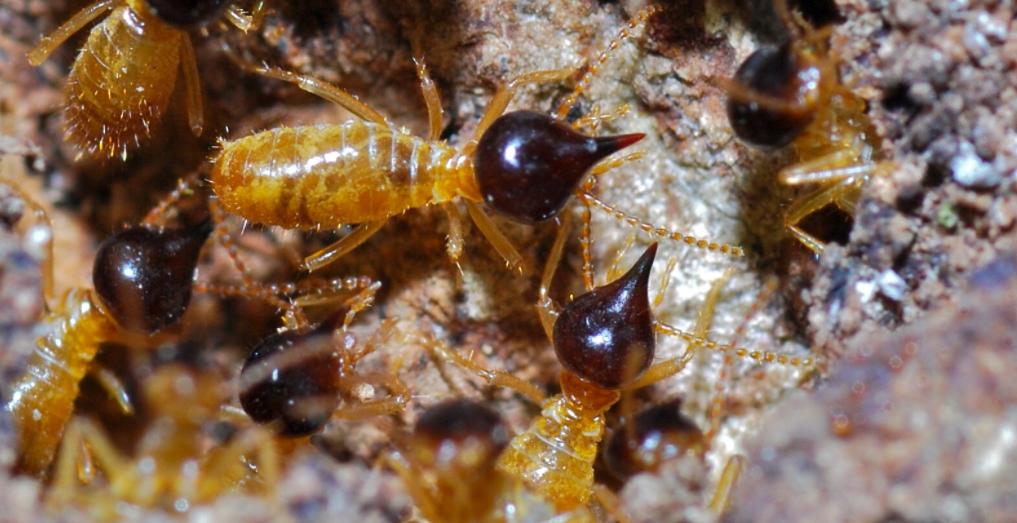 termites crawling