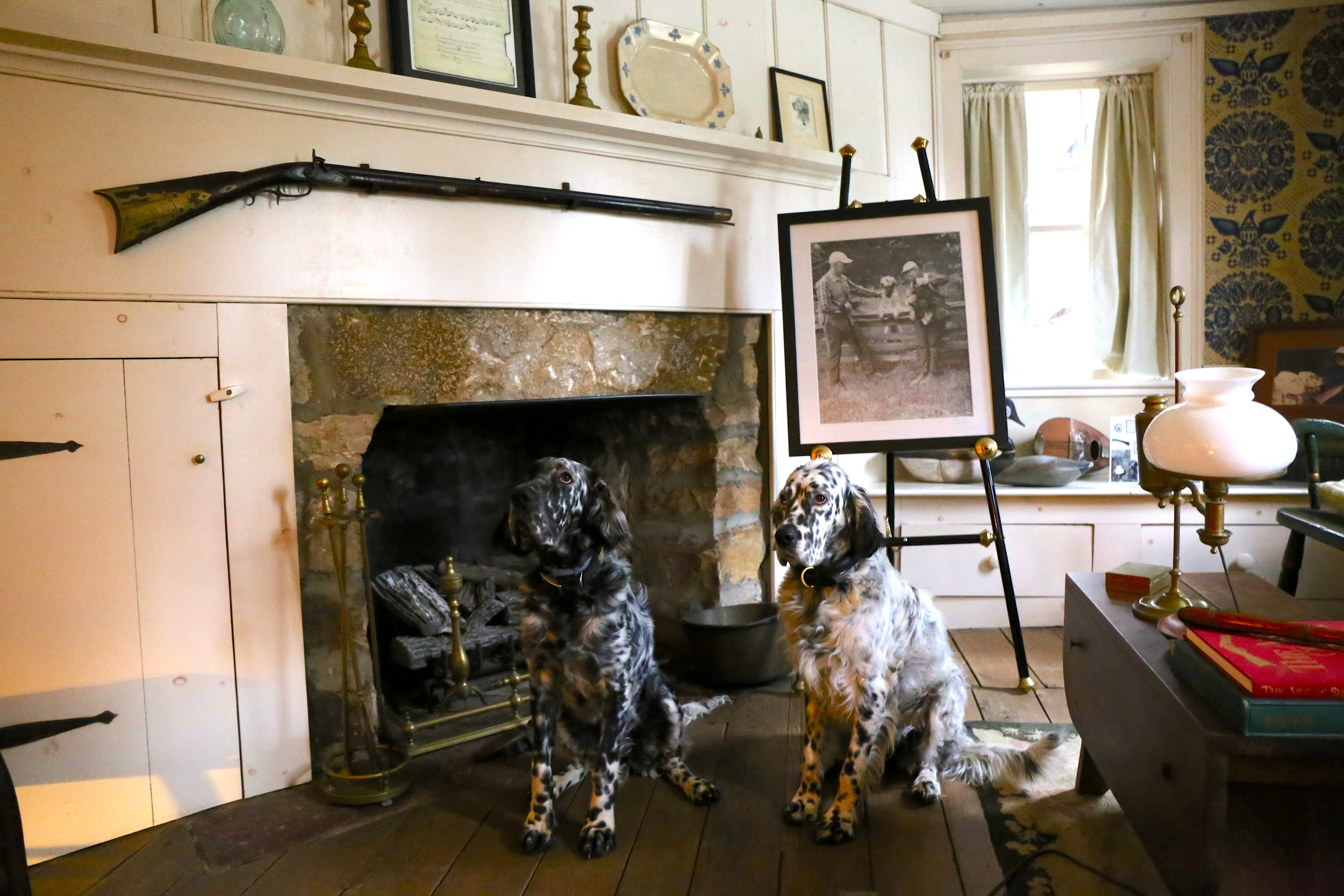 OH Setters Laurel and Willow posing in the long room. Carrying on the legacy of fine grouse dogs roaming the rooms at Old Hemlock.
