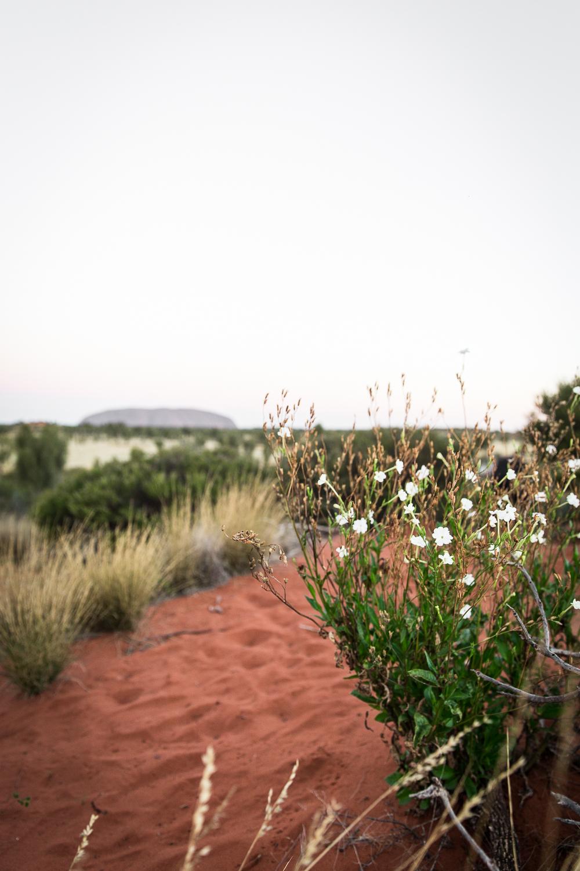 Lean Timms Uluru  (6 of 57).jpg
