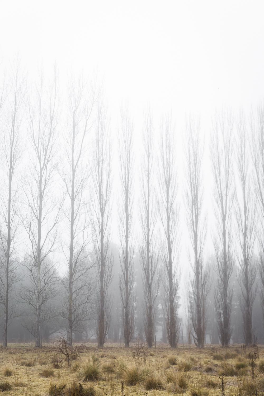Lean Timms Canberra Fog (1 of 21).jpg