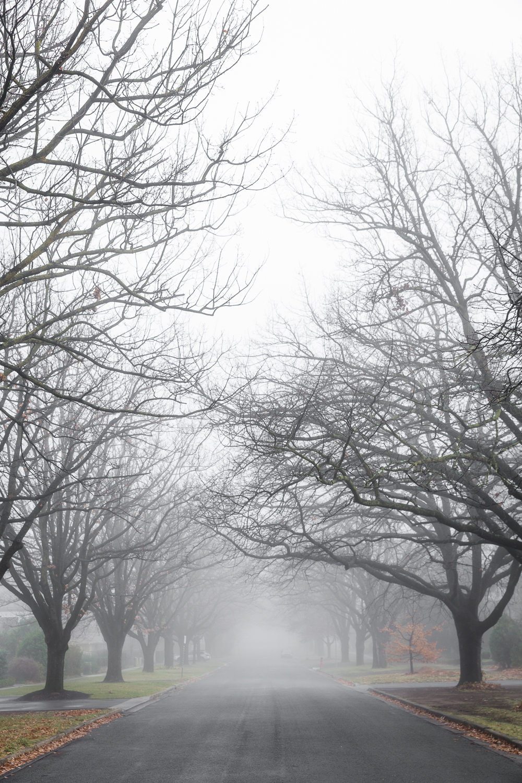Lean Timms Canberra Fog (4 of 21).jpg