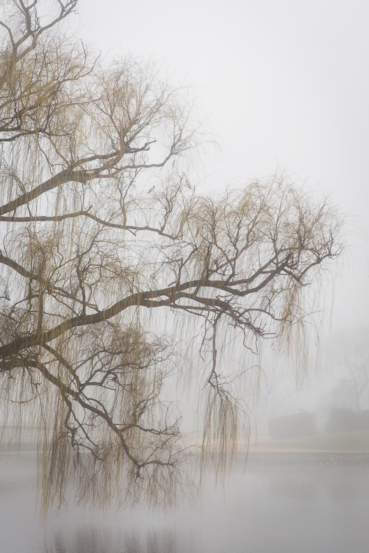 Lean Timms Canberra Fog (7 of 21).jpg