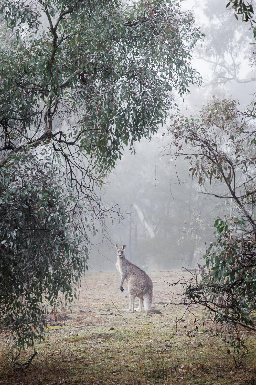 Lean Timms Canberra Fog (17 of 21).jpg