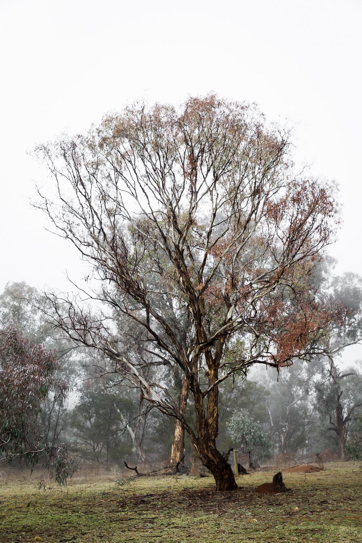 Lean Timms Canberra Fog (18 of 21).jpg