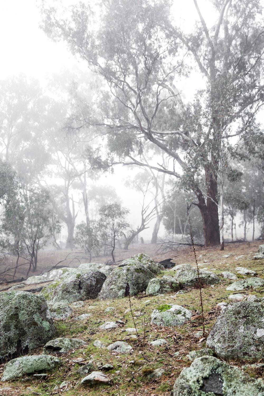 Lean Timms Canberra D1.jpg