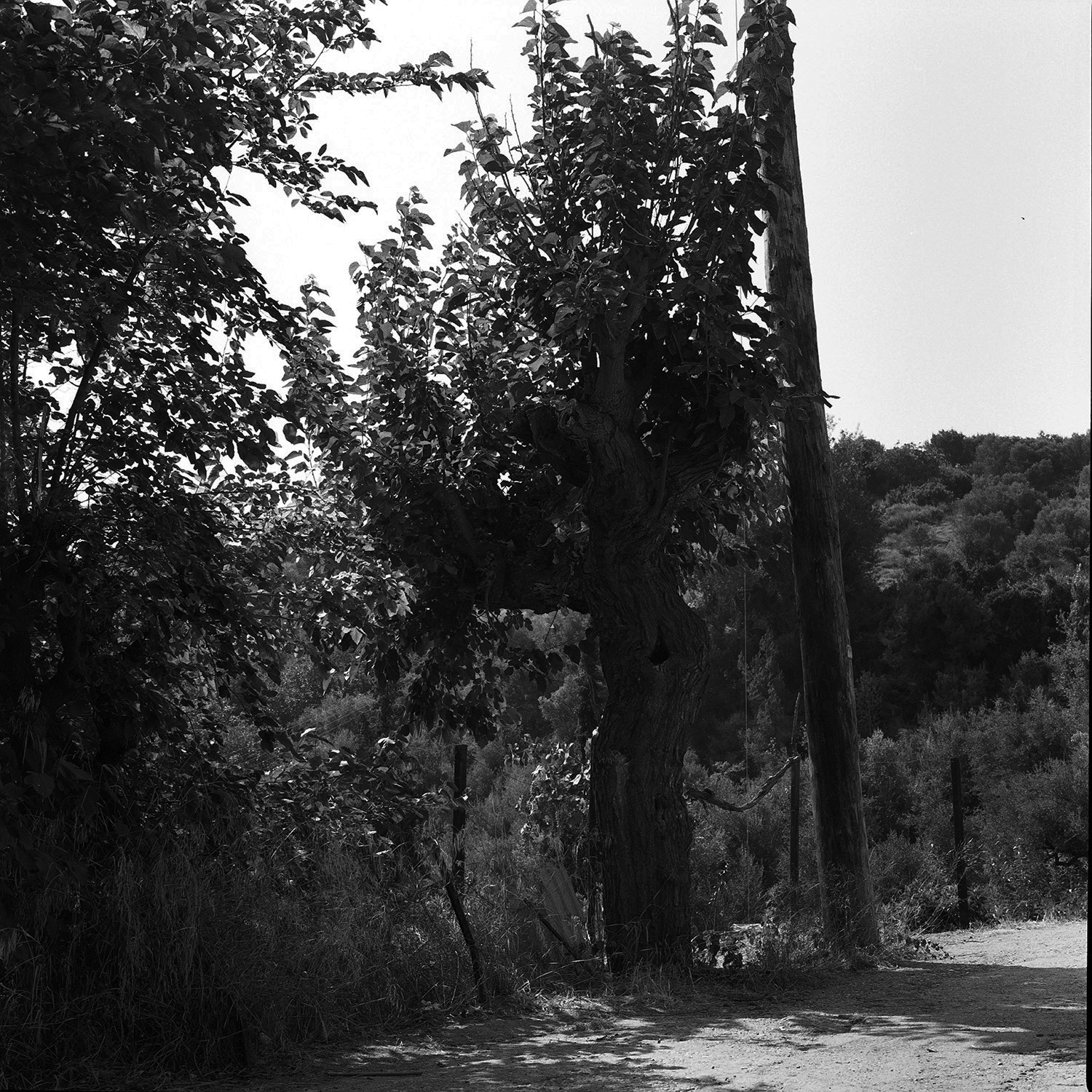 0004_my father's lands the fig tree.jpg