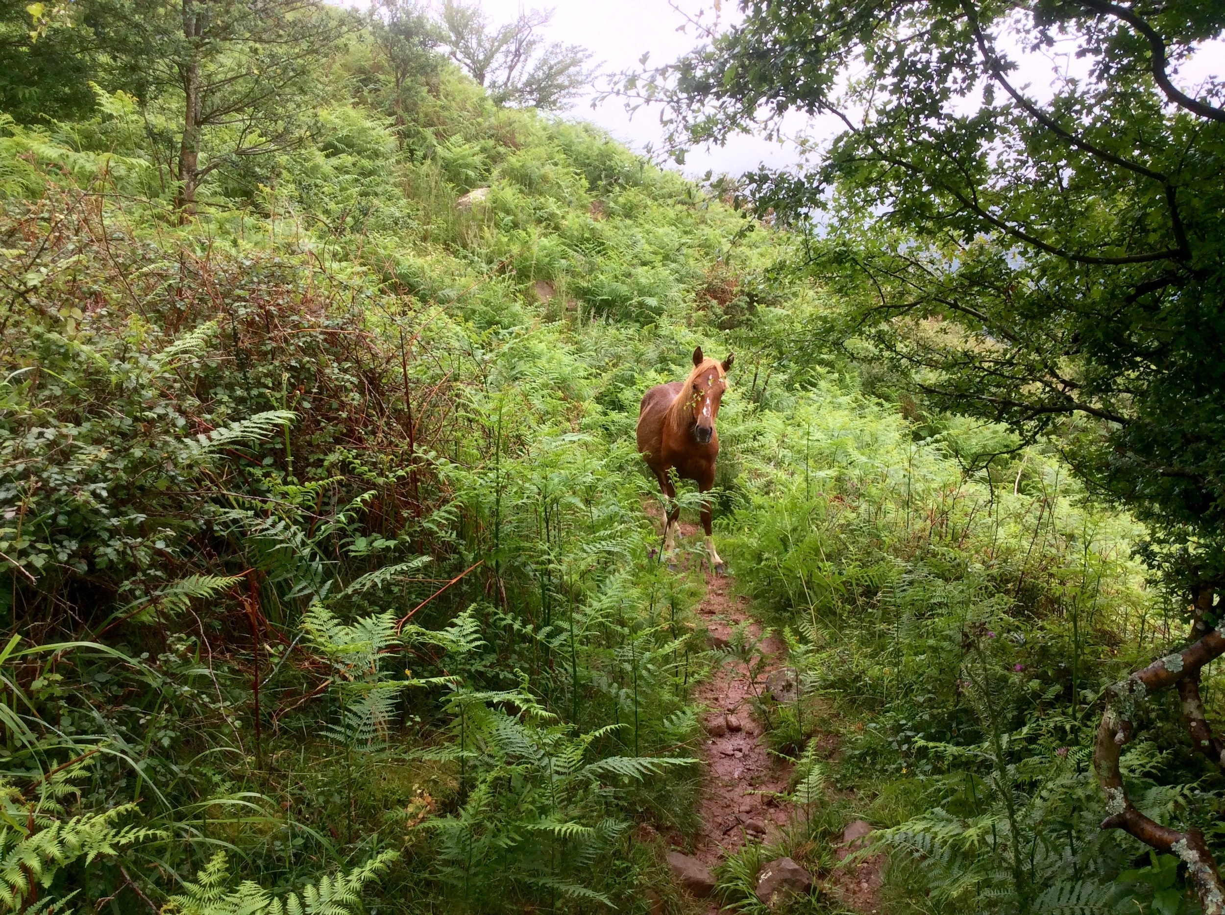A horse blocking my path on day one