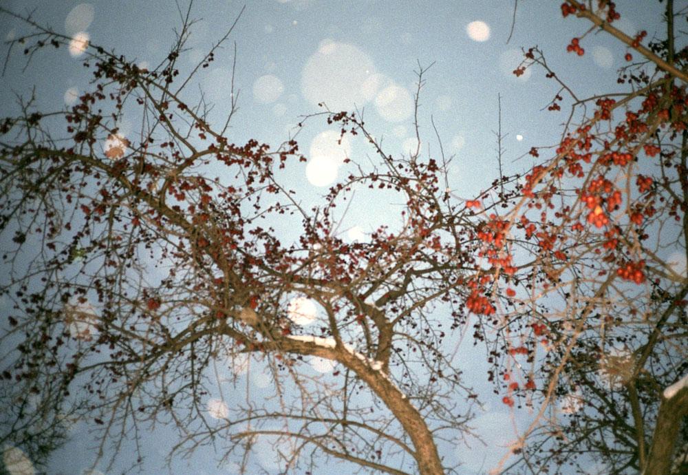 10cherrytree.jpg