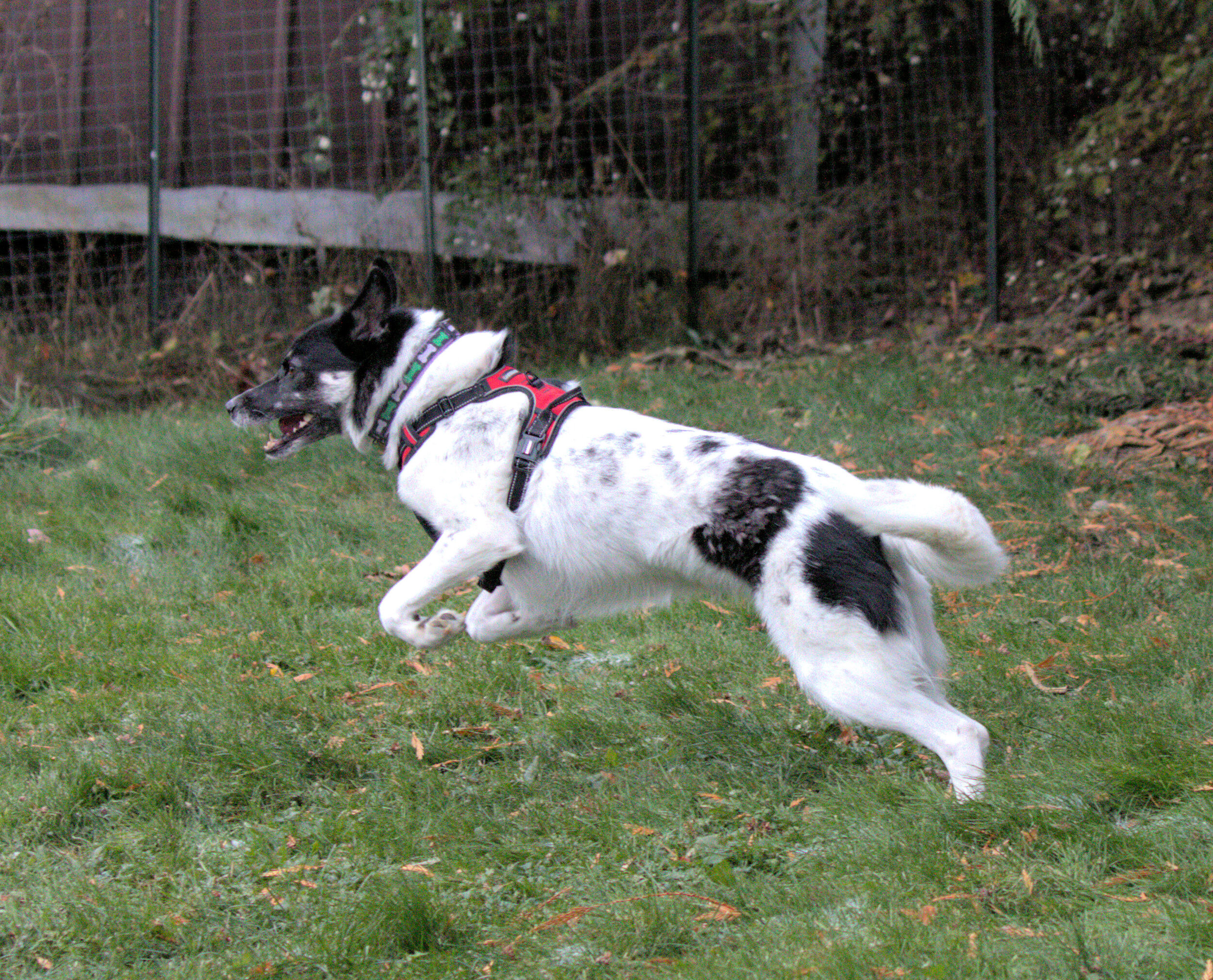 Donna Performing the Husky Prance