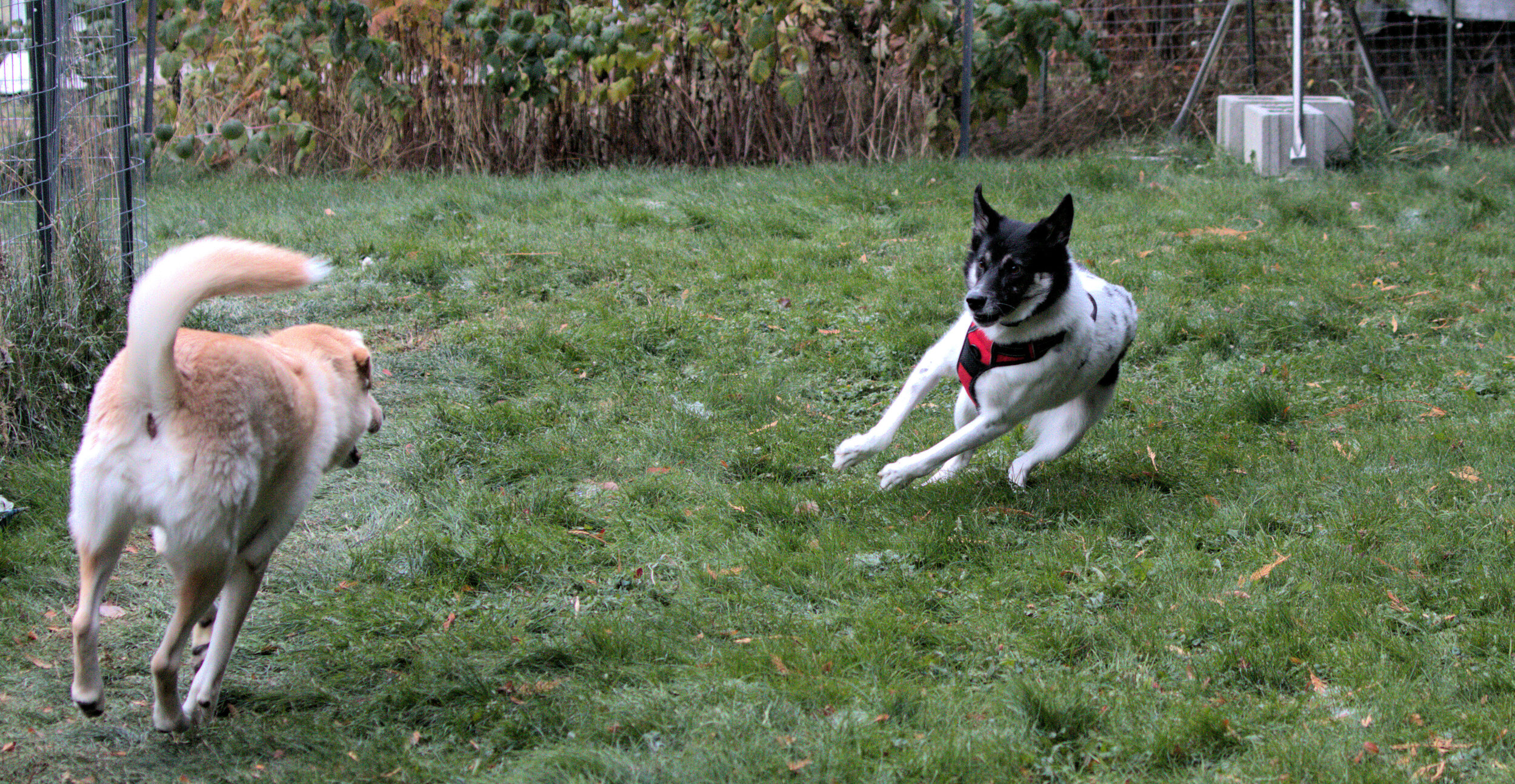 """Donna and Riley Playing """"Chase Me, Chase Me!"""""""
