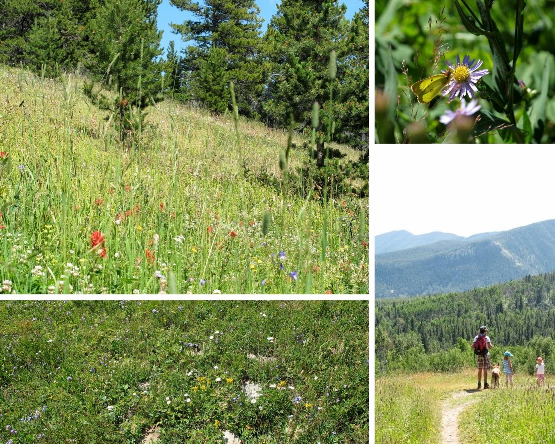 mountain+meadows+inspiration.jpg
