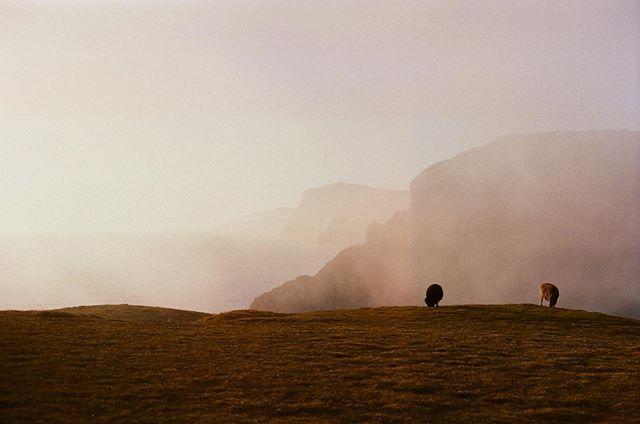 Moody sheep heaven on kodak 🐑