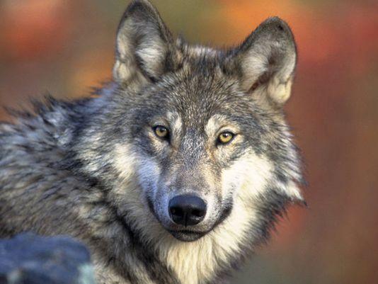 Photo: Gary Kramer / U.S. Fish and Wildlife Service
