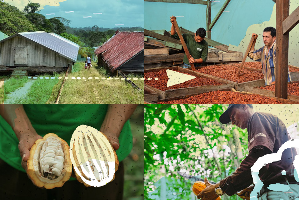 MeridianCacao-Farms-Cacao-Chocolate.JPG