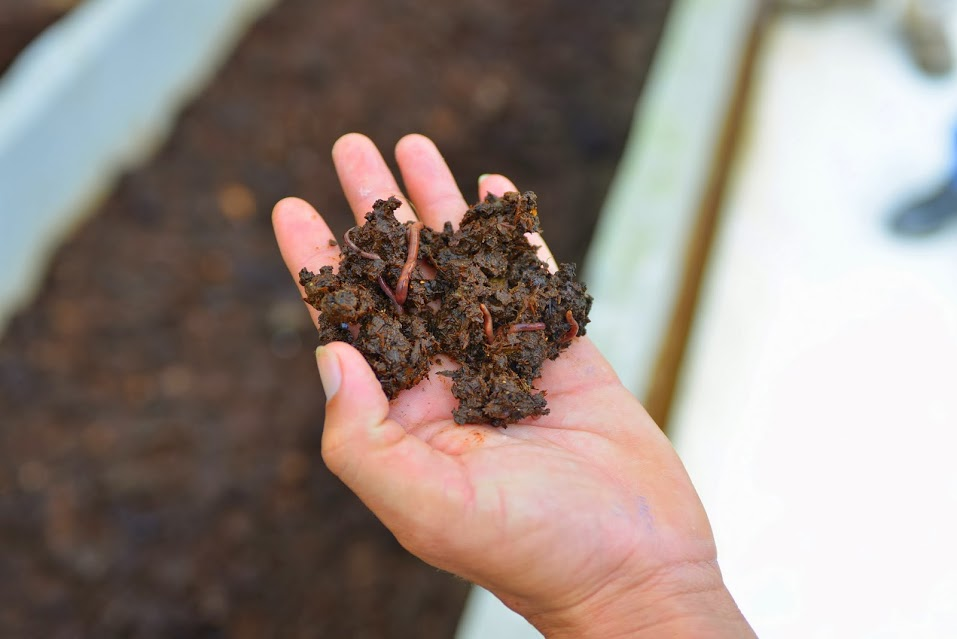 Being an Organic farm, Camino Verde uses excess husks, banana peels and pods and converts them into a nutrient rich compost to help fertilize the soil.