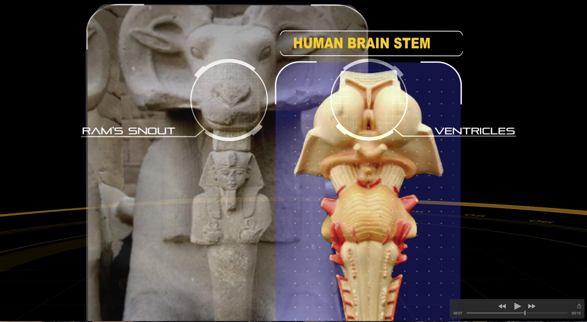 snout ram comparison.jpg