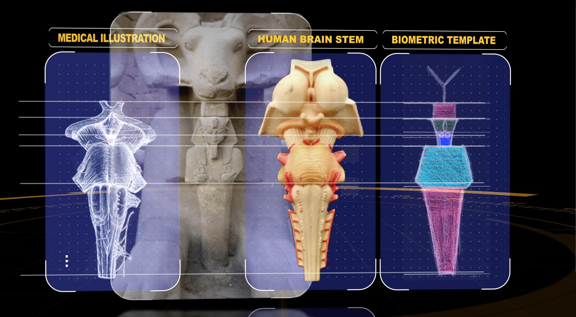 ram 4panel stem body comparisn.jpg