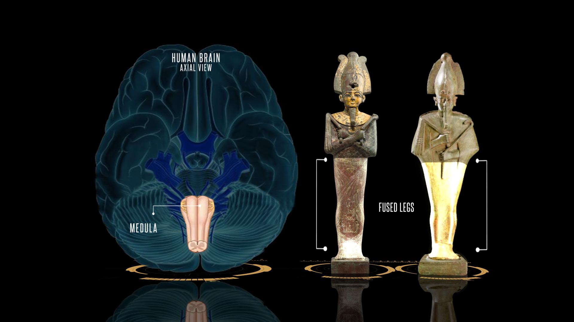 osiris medula fused legs target.jpg