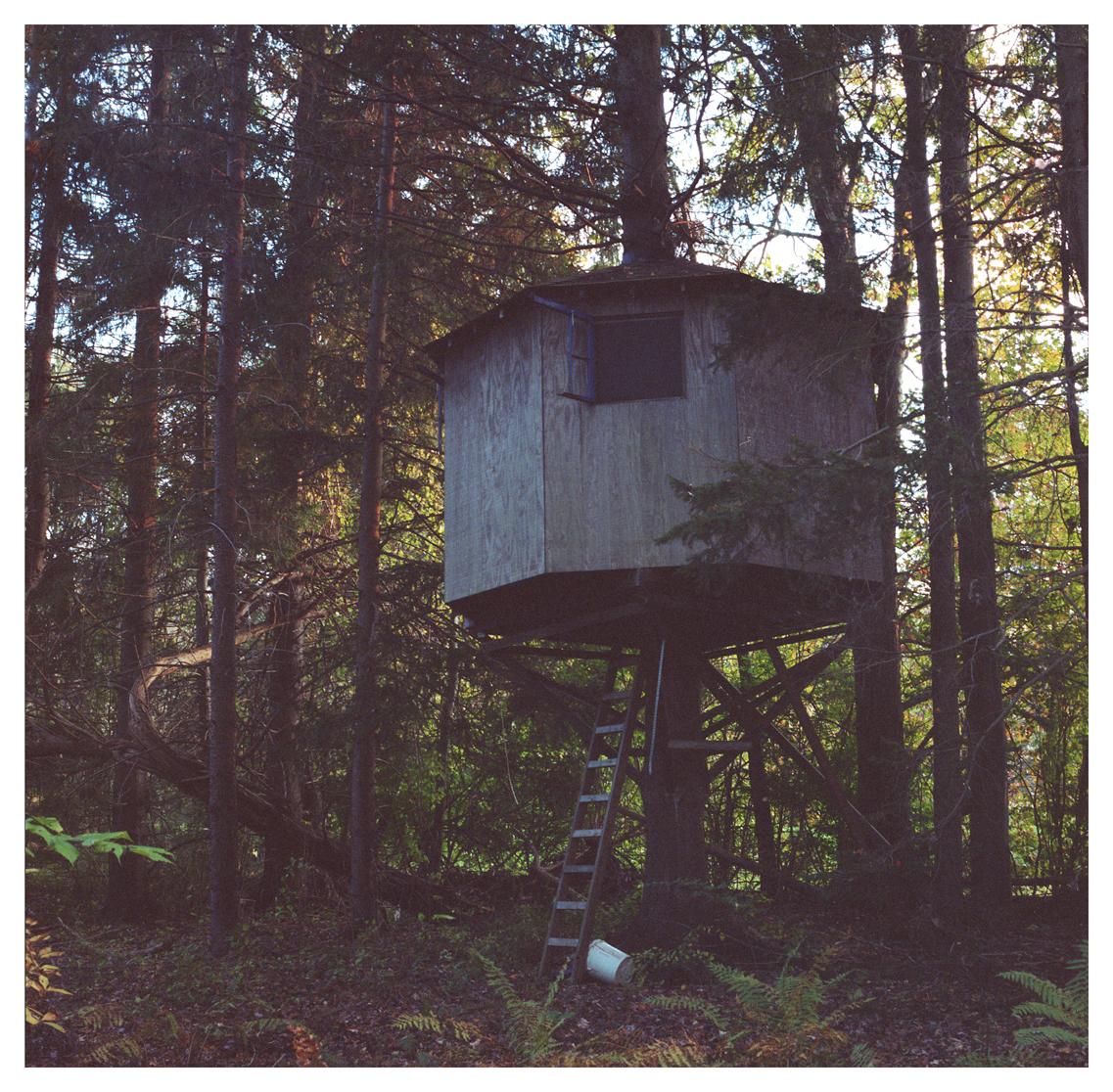 eleventhreeeleven tree house.jpg