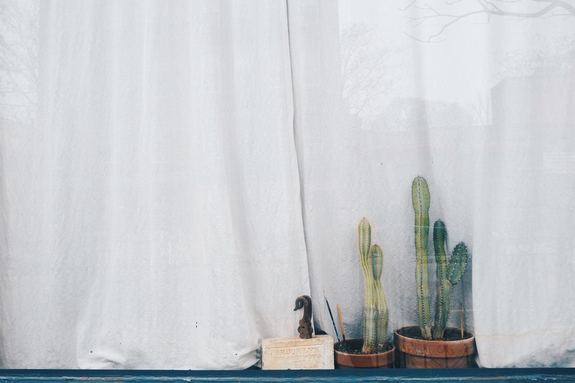 nyc cacti.jpg