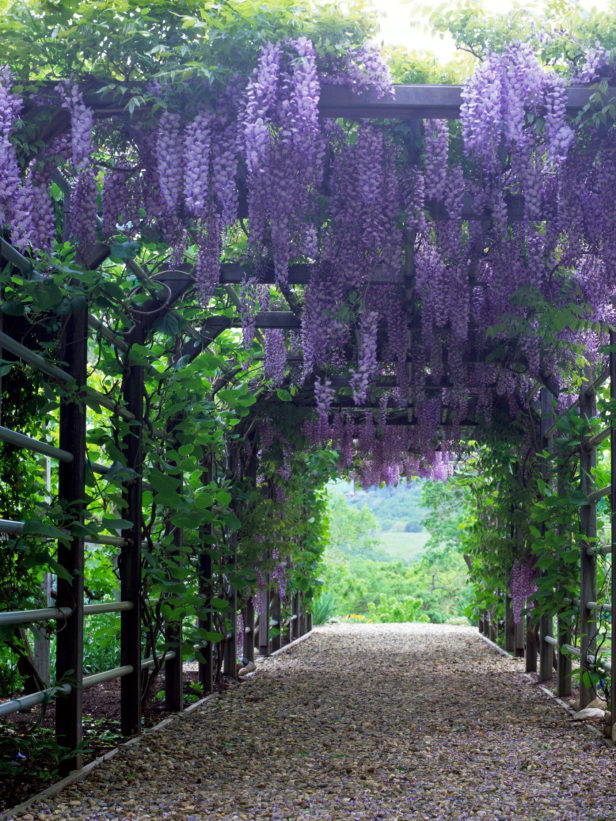 An amazing pergola -  source