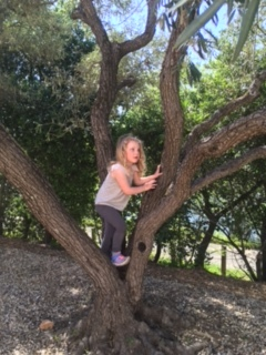 G climbing the many olive trees