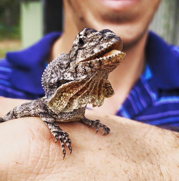 image via Australia Zoo Facebook page