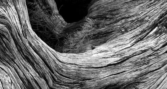 560px_black_and_white_tree_log.jpg