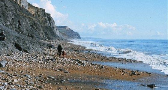 560px_Beach_at_Charmouth_-_geograph_org_uk_-_1208618,_Derek_Harper.jpg