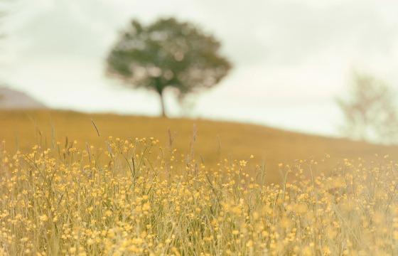 560px field of flowers by Silvestri Matteo.jpg