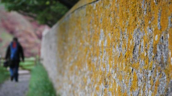 Photo: Wall, St. Abbs head. Adam Tomkins