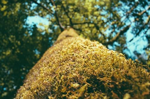 Tree, Paul Jarvis, unsplash.com