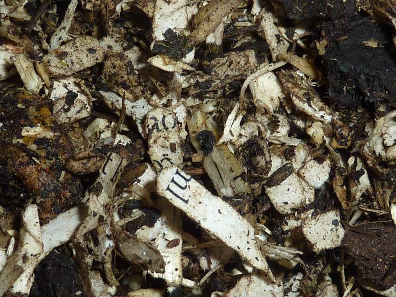 14-Paines-soil-day-15.jpg
