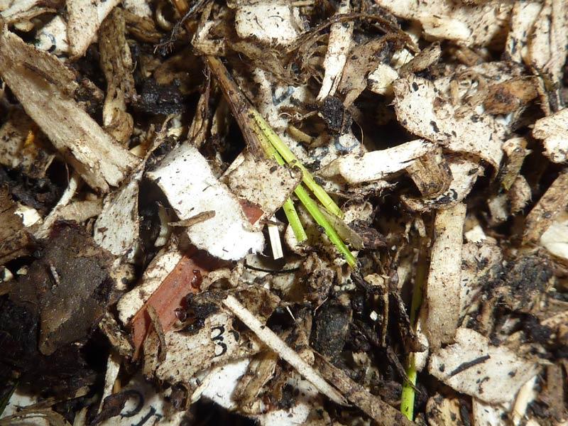 15-Paines-soil-day-16.jpg