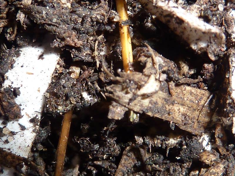25-Paines-soil-day-26.jpg