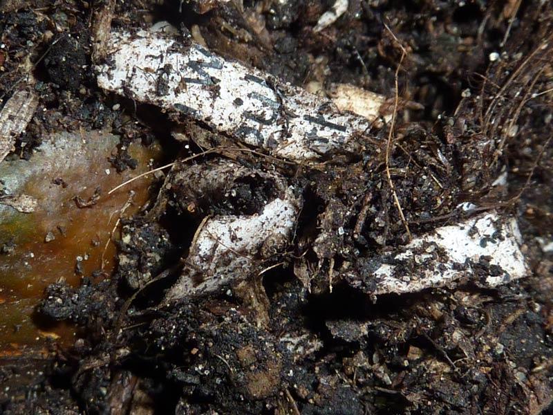 26-Paines-soil-day-27.jpg