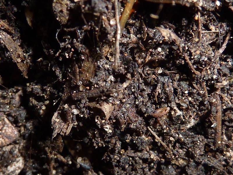 28-Paines-soil-day-29.jpg