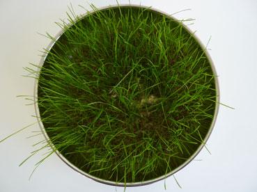 25a-growth-in-liquid-soil-only.jpg