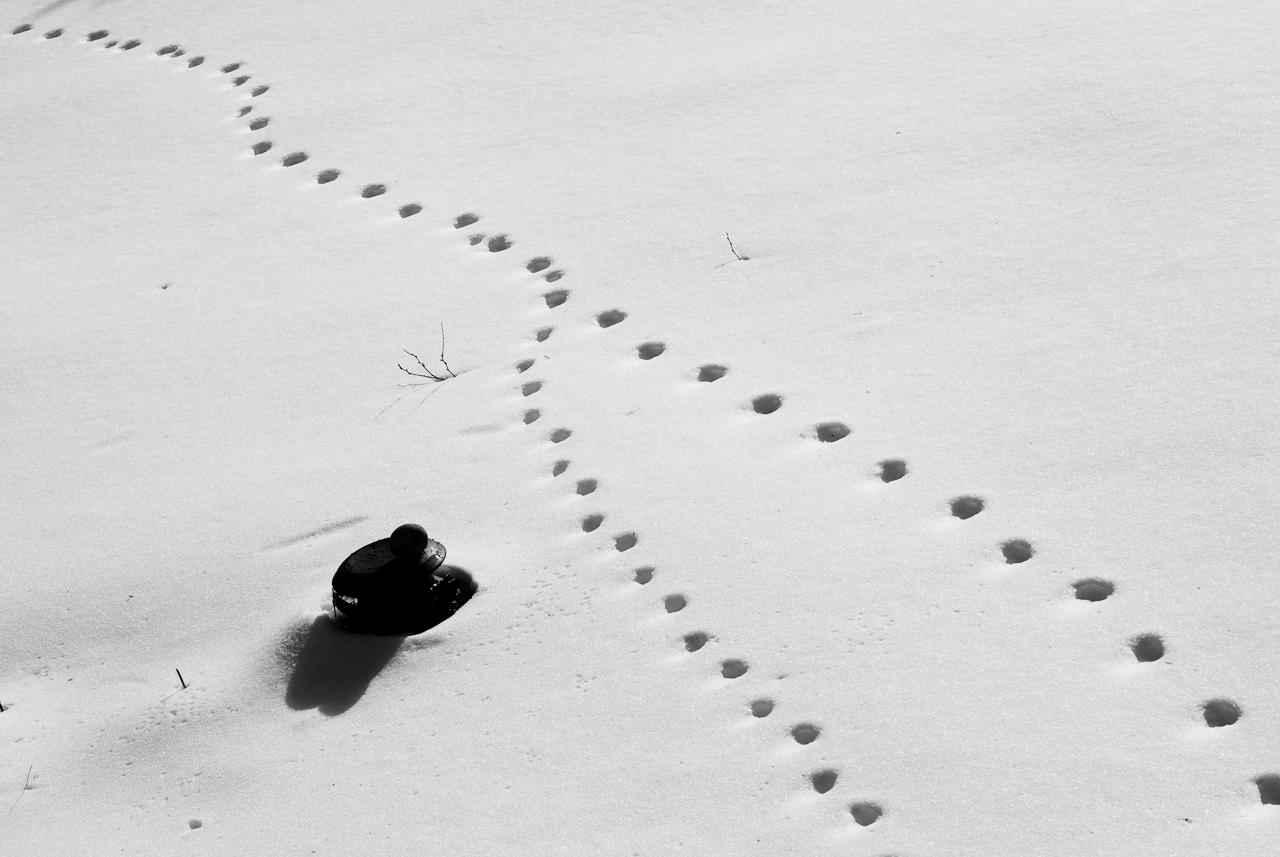 Olivier Bataille,  flickr