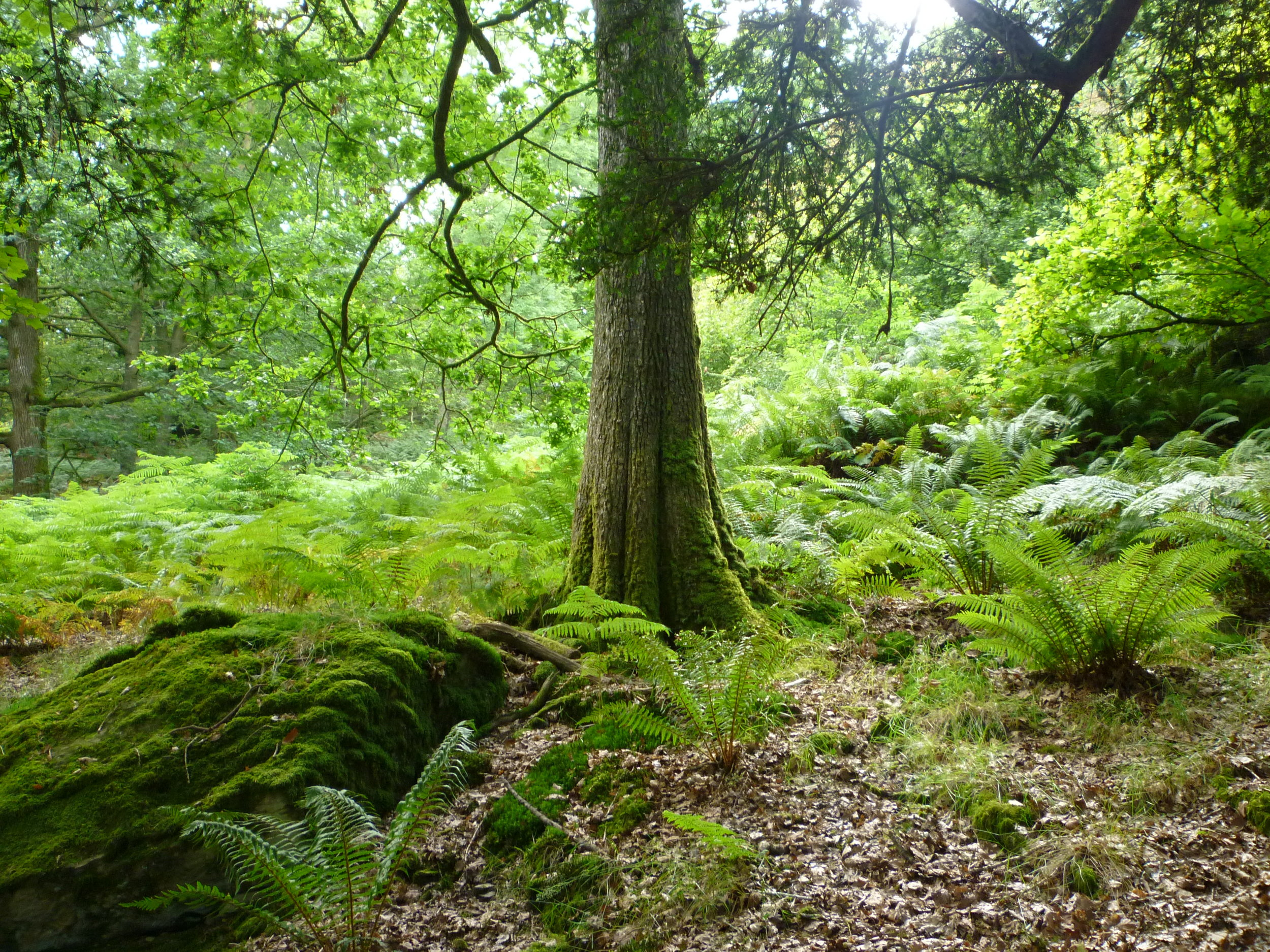 Forest by  David Sykes  on flickr.