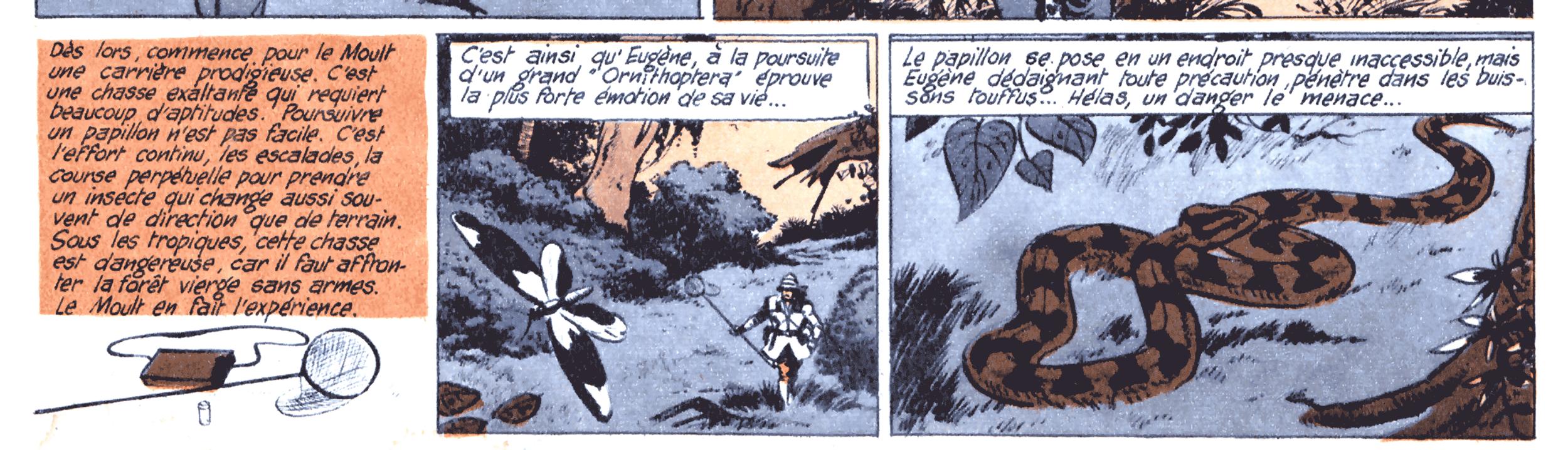 """ジャーナルTINTINユース7から77年 1956年5月24日の第396 """"Le carrousel de l'éphémère""""(ウジェーヌ・ル・ムールト、蝶ハンターの生活)"""