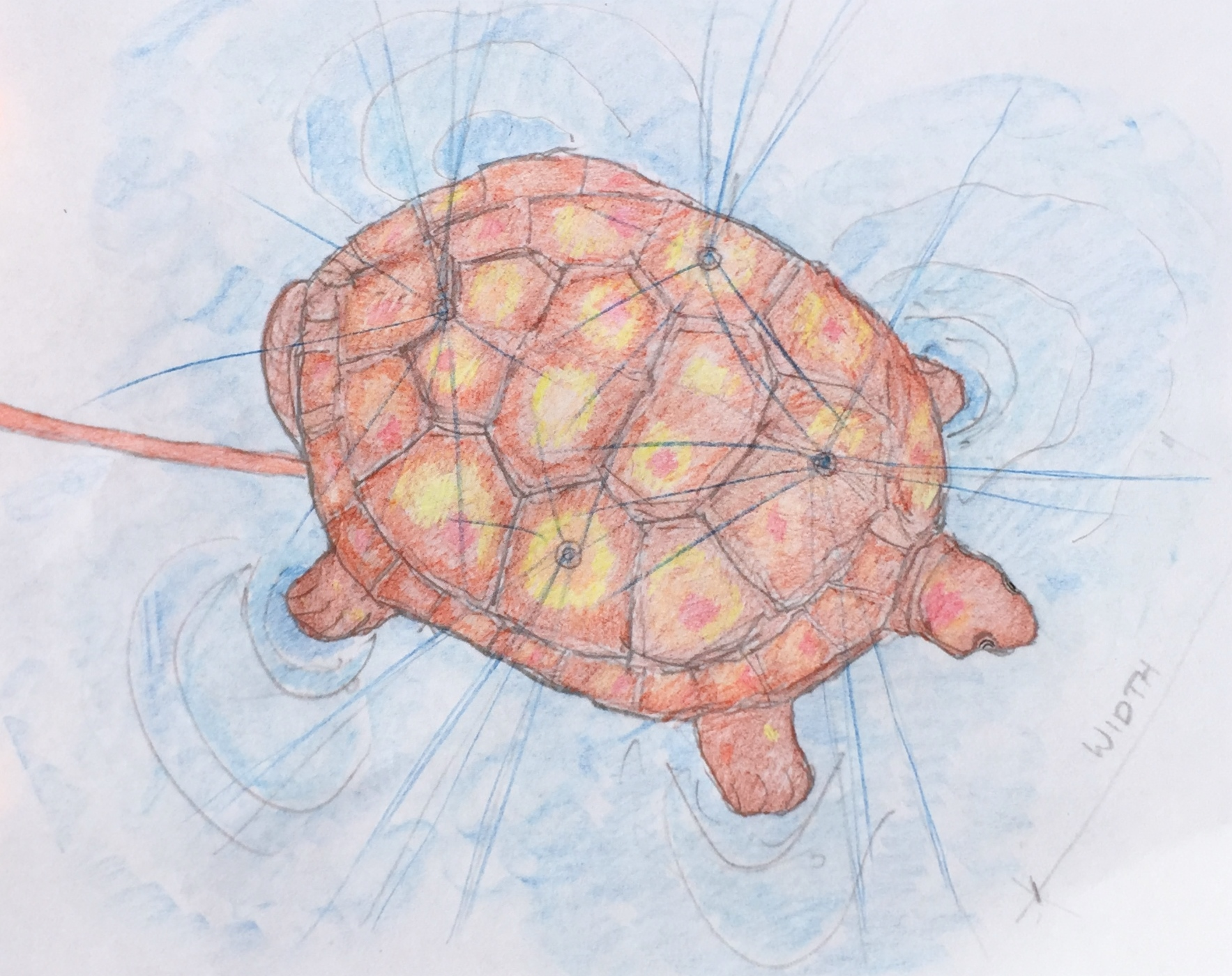 Aerial Turtle Colored One.JPG