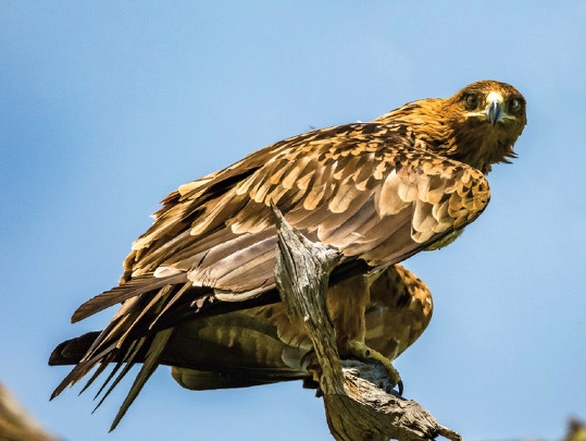 As many as 400 bird species can be spotted in one day at the world-renowned Nylsvley Nature Reserve. Photo from the Limpopo Tourism Destination Guide.