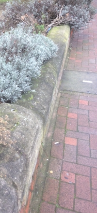 The brickwork pavement in Feb 17. Pretty good condition, no? Gone. A memory.
