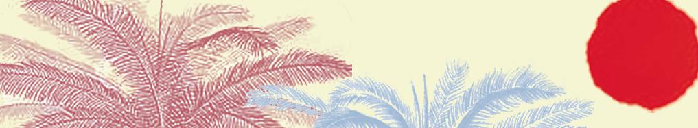 Palms & Sun Header.png