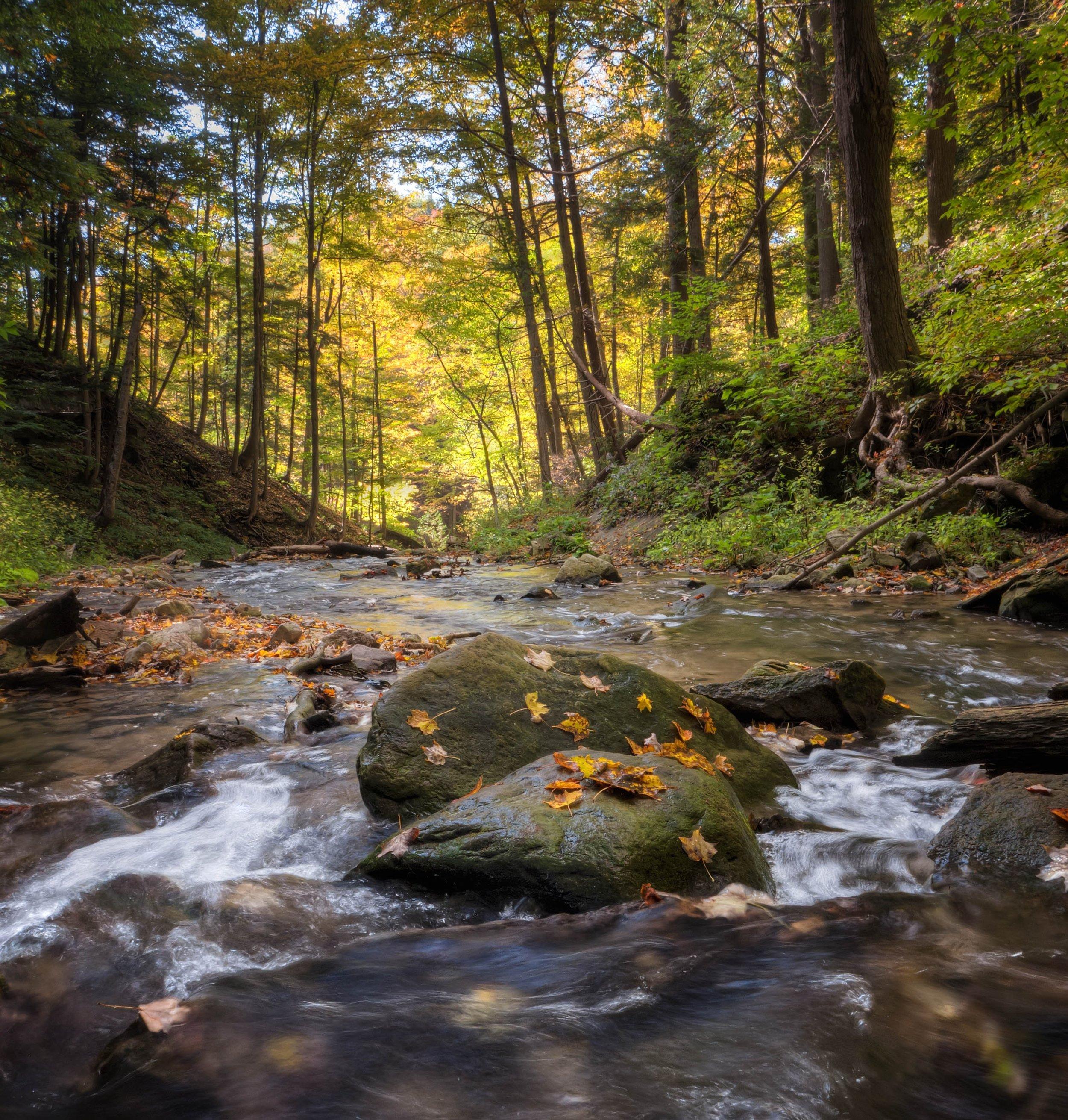 creek-landscape-nature-149609.jpg