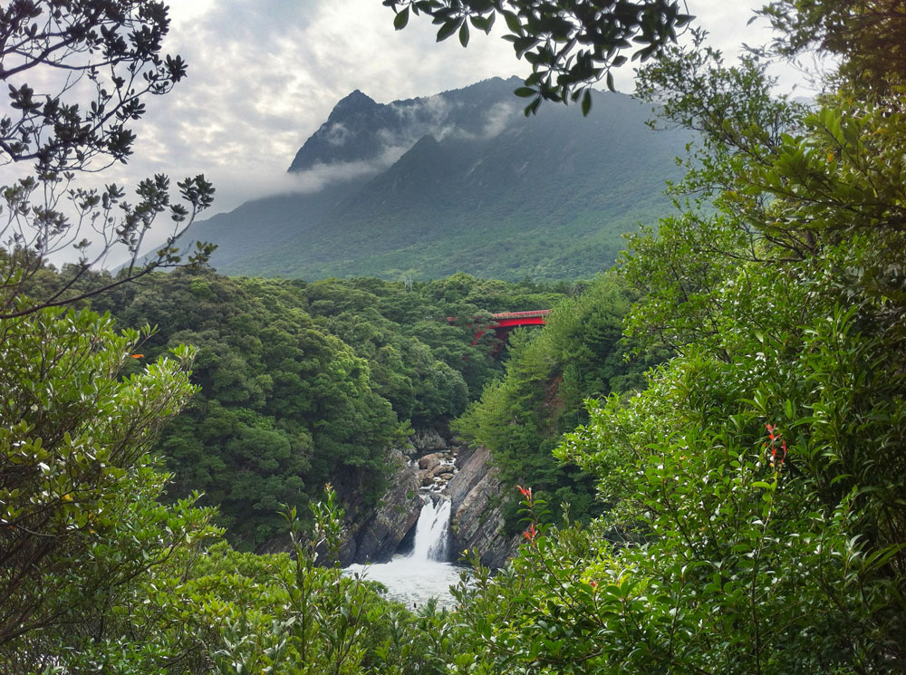 yakushima-mountain.jpg