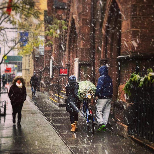First snow! Grabbing the tree with some help by citibike. • • • • • #nyc #nicenewyorker #ilovenewyork #ilovenyc #christmastree #tree #manhattan #nyclife #citylife #winterwonderland #nycwinter #snow #firstsnow