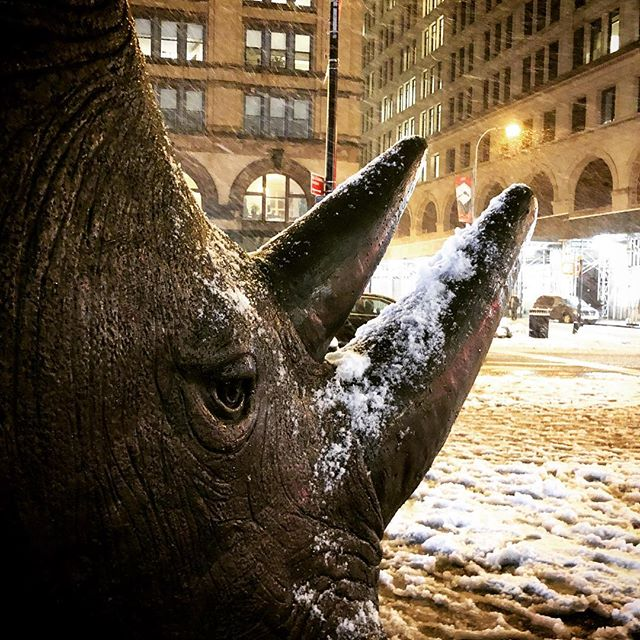 Goodbye Sudan, I am sorry our kind have done you wrong. #goodbyrhinos • • • • • #astorplace #nyc #streetart #newyorkcity #snowynight