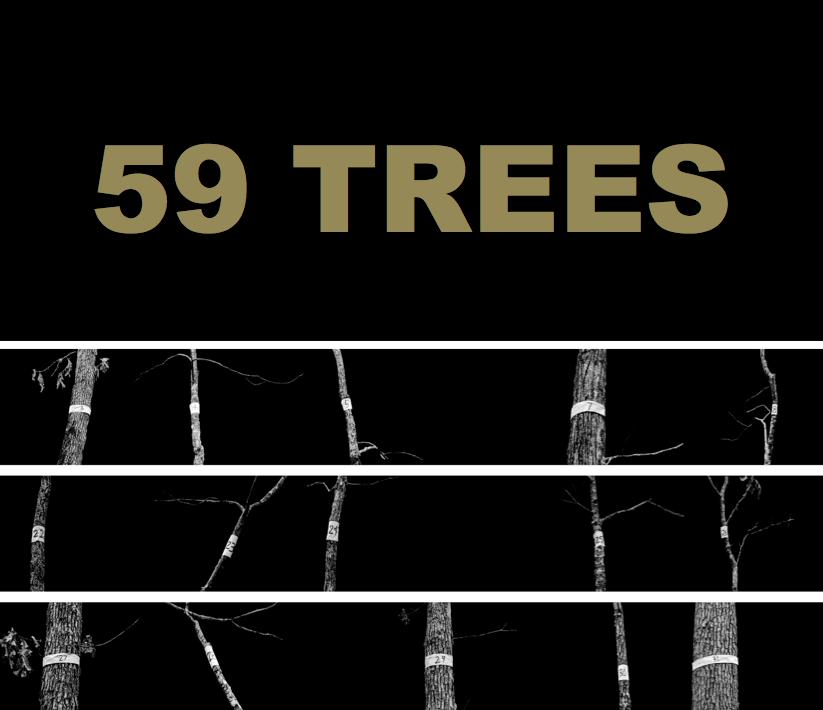59trees